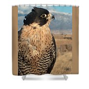 Peregrine Falcon Shower Curtain