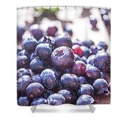 Picking Huckleberries Shower Curtain