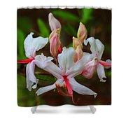 Piedmont Azalea Shower Curtain