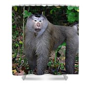 Pig-tailed Macaque Shower Curtain