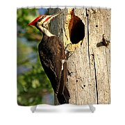 Pileated #26 Shower Curtain