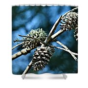 Pine Cones On Dry Branch Shower Curtain