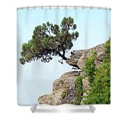 Pine Tree On A Rock Shower Curtain