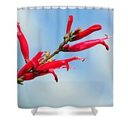 Pineapple Sage Shower Curtain