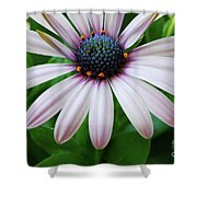 Pink African Daisy Shower Curtain