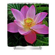 Pink Blooming Lotus Shower Curtain