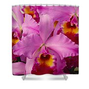 Pink Cattleya Orchids Shower Curtain by Allan Seiden - Printscapes