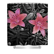 Pink Daylilies With Partially Desaturated Petals And Black And White Background Shower Curtain