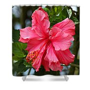 Pink Hibiscus Flower On A Tree Shower Curtain