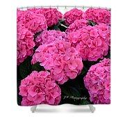 Pink Hydrangeas Shower Curtain