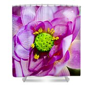 Pink Lotus Shower Curtain