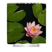 Pink Lotus Waterlily Shower Curtain