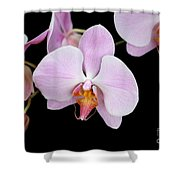 Pink Orchid Vii Shower Curtain