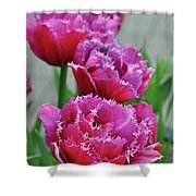 Pink Parrot Tulips Shower Curtain