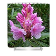 Pink Rhododendron 0070 Shower Curtain