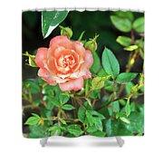 Pink Rose In The Garden Shower Curtain