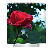 Pink Rose With Dew Drops Shower Curtain
