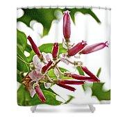Pink Tropical Flower In Huntington Botanical Garden In San Marino-california Shower Curtain