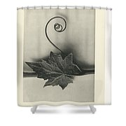 Plant Studies, 1928, Nature Series, By Karl Blossfeldt  Shower Curtain
