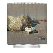 Plover Chick Shower Curtain