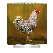 Plymouth Rock Rooster Shower Curtain