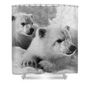Polar Bear Cubs Shower Curtain