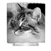 Polly Shower Curtain