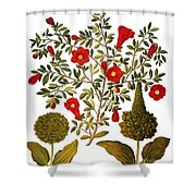 Pomegranate, 1613 Shower Curtain