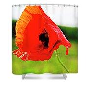 Poppy The Beauty Shower Curtain