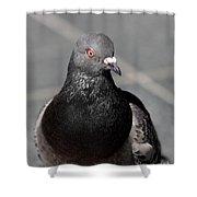 Portrait Of A Pigeon Shower Curtain