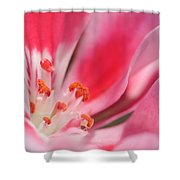Small Details Matter Shower Curtain