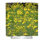 Pretty In Yellow Shower Curtain by Kathy DesJardins