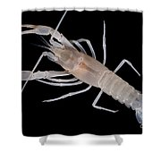 Prickly Cave Crayfish Shower Curtain