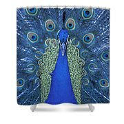 Proud Peacock Shower Curtain