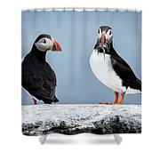 Puffins Shower Curtain