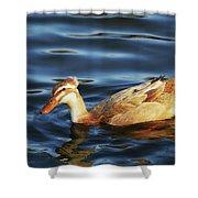 Puffy Headed Duck Shower Curtain