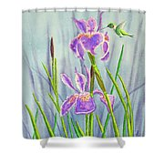 Purple Dutch Iris And Hummer Shower Curtain
