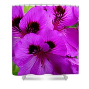 Purple Flowers  Shower Curtain