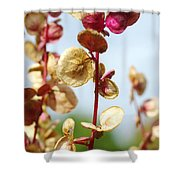 Purple Goosefoot Chenopodium Shower Curtain