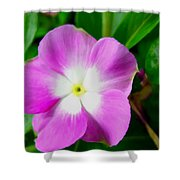 Purple Periwinkle Flower 1 Shower Curtain