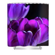 Purple Tulips 1 Shower Curtain