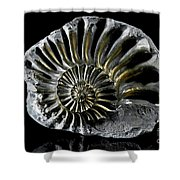 Pyritized Ammonite Shower Curtain