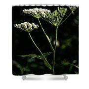 Queen Anne Lace Shower Curtain