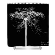 Queen Annes Lace, X-ray Shower Curtain