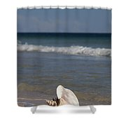 Queen Conch On The Beach Shower Curtain
