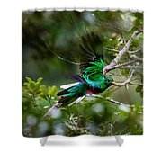 Quetzal In Costa Rica Shower Curtain