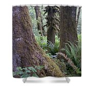 Quinault Rain Forest 3152 Shower Curtain