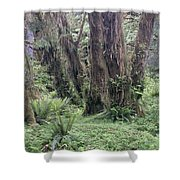 Quinault Rain Forest 3156 Shower Curtain