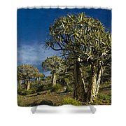Quiver Tree Forest Shower Curtain