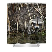Raccoon Fishing Shower Curtain